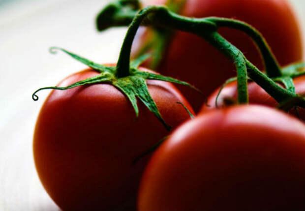 Китайский способ выращивания помидоров: двойной урожай