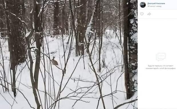 Фото дня: в леса Левобережного забрел заяц