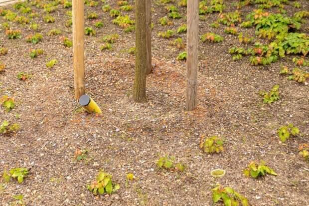подкормка деревьев в трубу