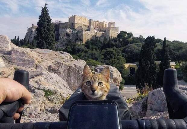 Бездомная кошка отправилась в кругосветку и прославилась