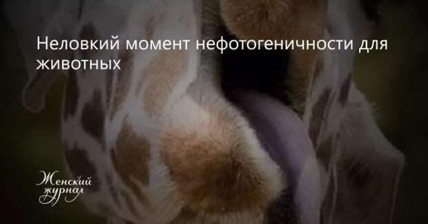 Тот самый неловкий момент. Чертовская Подборка chert-poberi-moment-chert-poberi-moment-14191230072020-4 картинка chert-poberi-moment-14191230072020-4