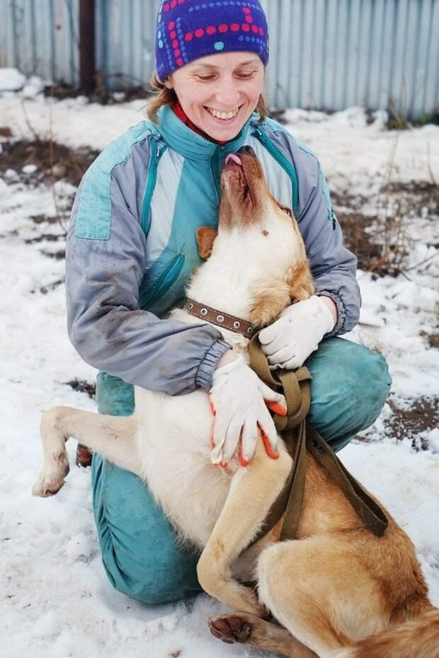 Волонтер 2 года искала этому псу хозяев, но затем решила прекратить попытки