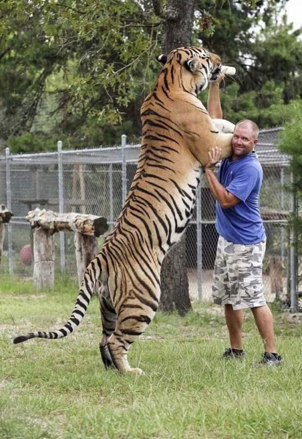 30+ животных, реальные размеры которых вас поразят