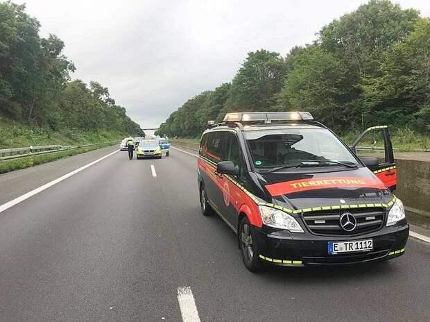 В Германии полицейские перекрыли участок автобана ради спасения котенка
