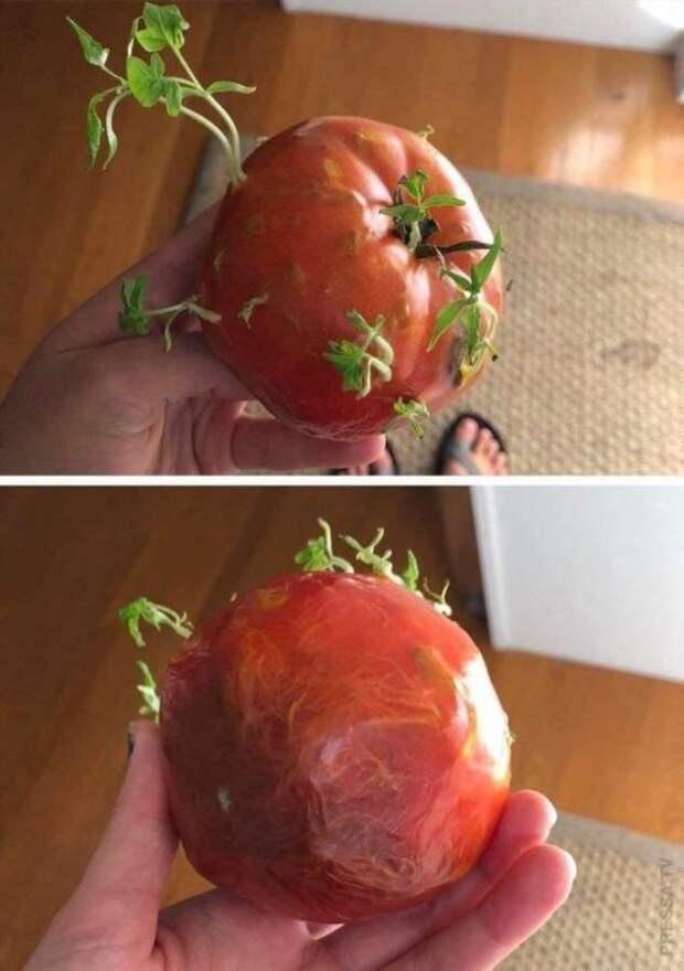 Как прорастают плоды