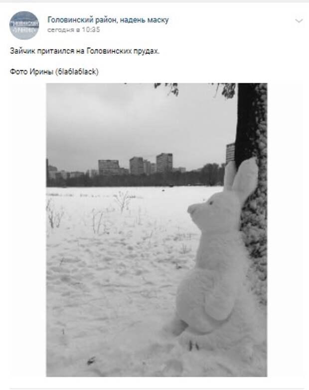Фото дня: обновленный заяц у Головинских прудов