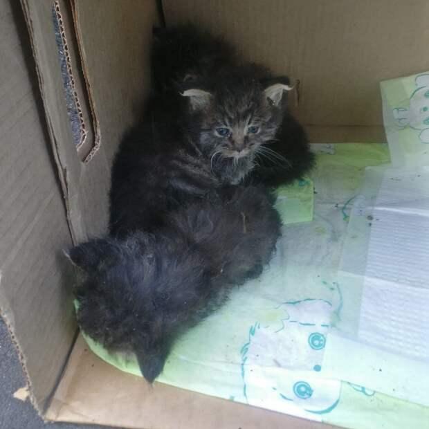 Троих котят в коробке подкинули к дому на Живописной