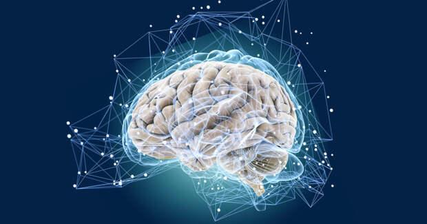 Врач рассказала о вредных для мозга человека продуктах