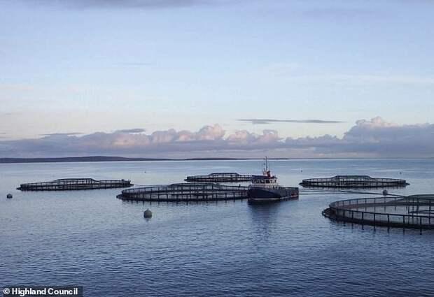 В Шотландии запретили рыбную ферму, потому что она помешала местным ...русалкам