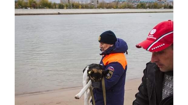 В Омске спасли собаку, застрявшую на острове посреди Иртыша