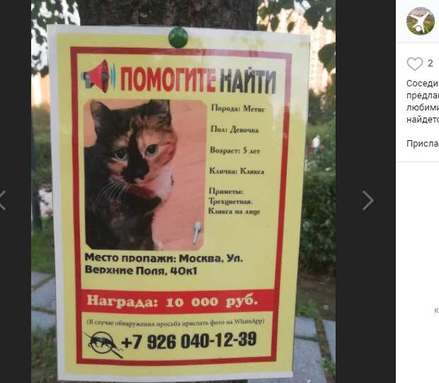За пропавшую кошку Кляксу в Марьине нашедшему обещали вознаграждение