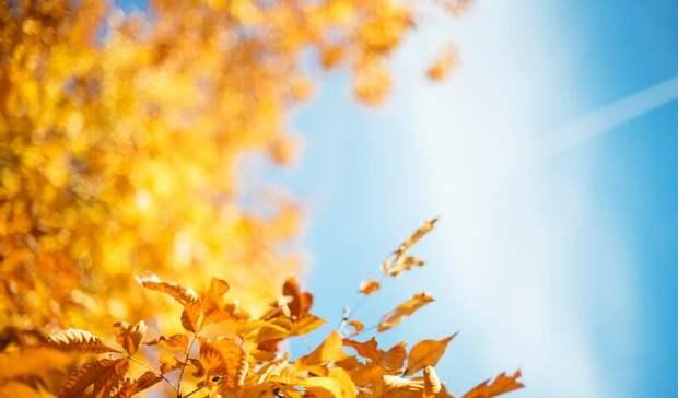 «Осенины», день шарлоток и cover band: мероприятия недели в Нижнем Тагиле