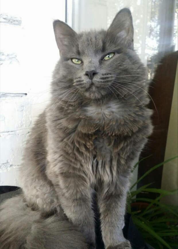 Шотландский котёнок ходил по мокрым улицам пока его не взяла к себе под опеку милая старушка