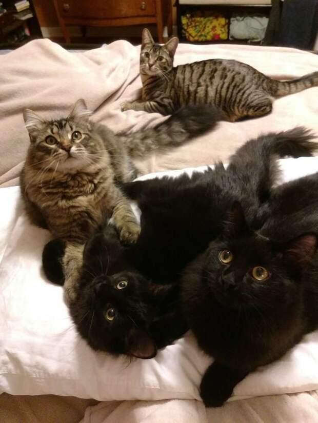 Муж с женой согласились временно присмотреть за четверыми котятами, но у котят были свои планы