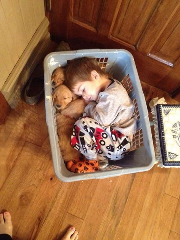 Малыш заснул в корзине со своими щенками золотистого ретривера.