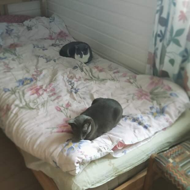 Что делать если кошка какает на кровать?