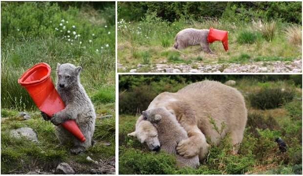 Вот такая игрушка у медвежонка животные, игрушка, медвежонок