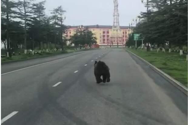 В Магадане застрелили медведя