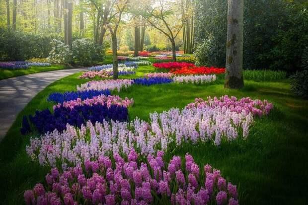 Когда 7 миллионов тюльпанов цветут все сразу: фотографу удалось запечатлеть сады без людей
