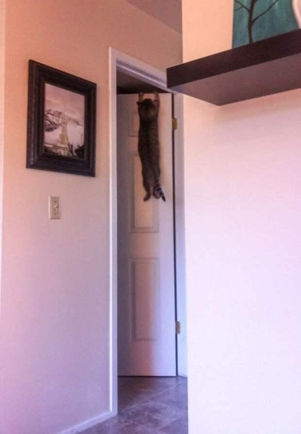 Неловкий момент животные, забавно, кот, коты, кошка, подборка, прикол, юмор