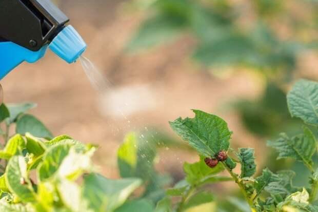 Правила, которые надо соблюдать при обработке растений пестицидами