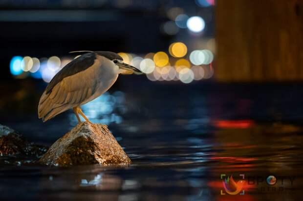 Daphne Wong / ©Bird Photographer of the Year 2021