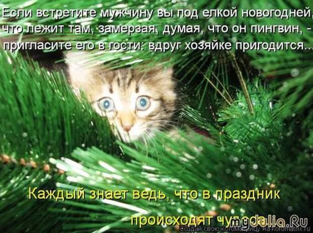 Новогодняя котоматрица.