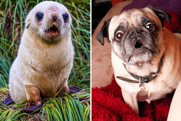 28.  животные, собака, сходство, тюлень