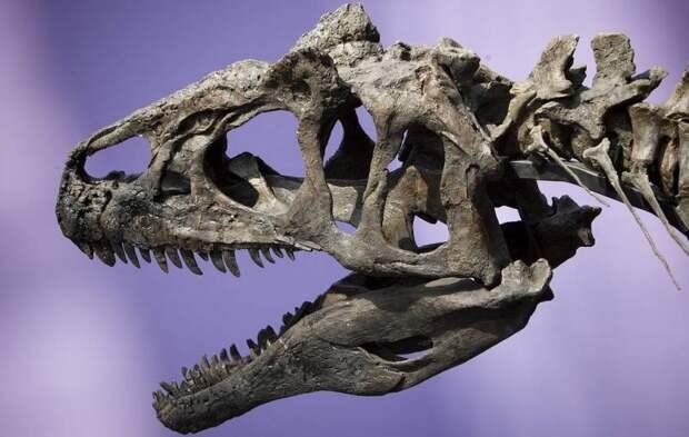 В США Нашли Останки Древнейших Аллозавров Земли