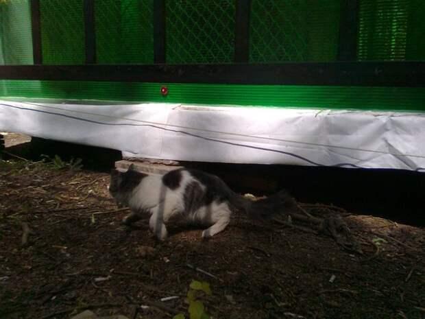 Шунька из парка аттракционов доброта, жизнь, история, кошка