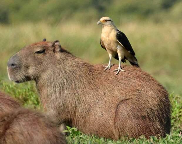 Животные, которые выбрали необычное средство передвижения (19 фото для хорошего настроения)