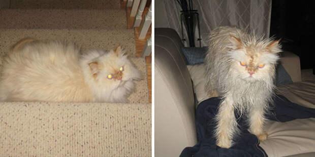 7 угарных фото мокрых котов, которые хотят убивать