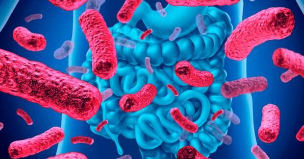 Чем отличаются микробы в организмах бедных и богатых людей?