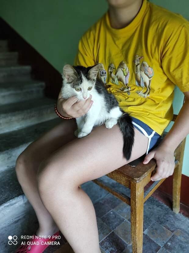Ищет дом очень ласковый и мурчлявый мальчик, который вырастет очень красивым и умным котом)