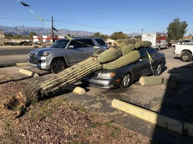А где-то на машину падают кактусы... и это пройдет, неудачники, смешно, юмор