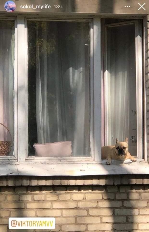 Фото дня: четверолапый француз встречает осень в районе Сокол