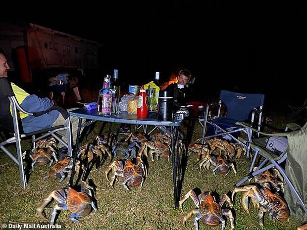Десятки огромных голодных крабов нарушили семейный пикник в Австралии