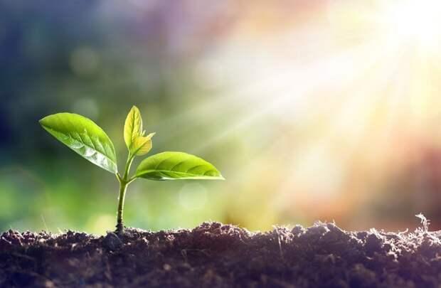 3. Освещение дача, овощи, огород, растения, советы, урожай