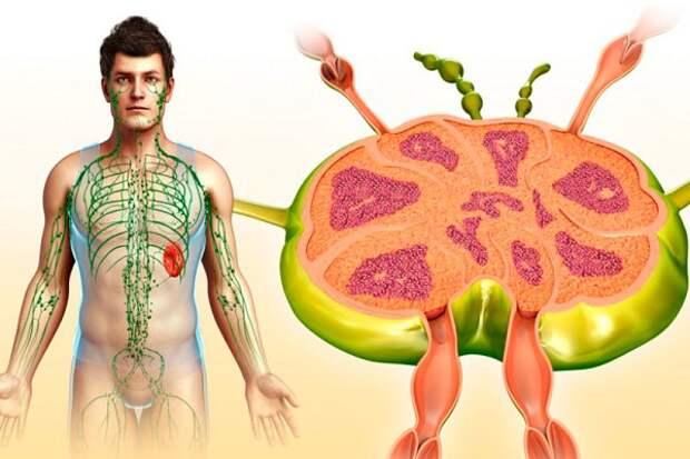 О чем говорят воспаленные лимфоузлы