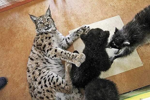 Алена воспитала не только котят, но и детенышей других видов Фото: Юлия ПЫХАЛОВА