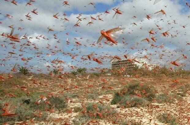 Мао Цзэдун против… воробьев: Почему сражение с птицами закончилось катастрофой для Китая