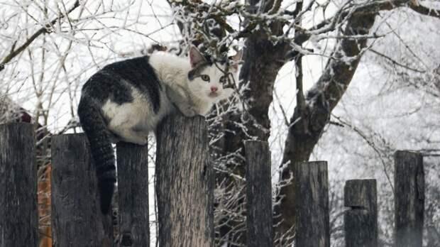 Ну, начнём! город, домашние животные, забор, кот, кошка, село, улица, эстетика
