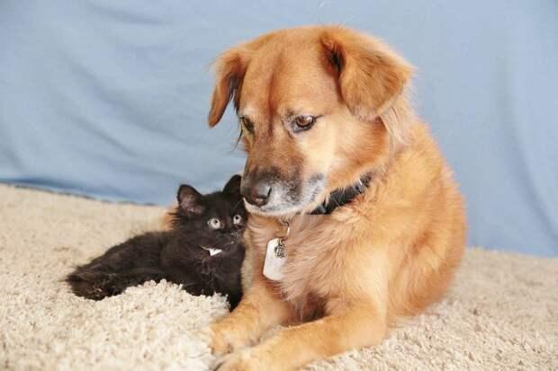 Пёс Бутс который работает кошачьей няней-2