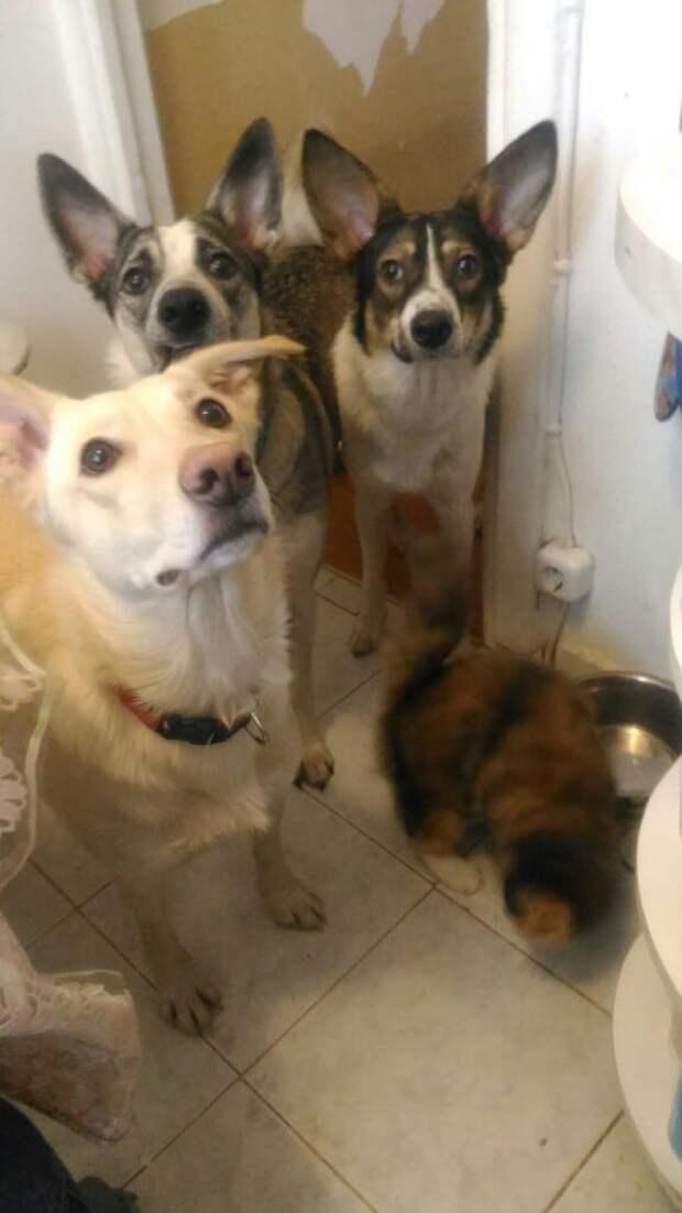Когда люди нашли в мусорном баке щенков, девушка сразу вызвалась забрать их себе