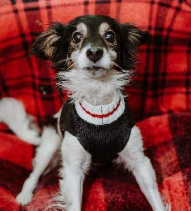 Брошенный хозяевами пес сидел на привязи и дрожал от холода. В тот вечер намело много снега, и грянули морозы