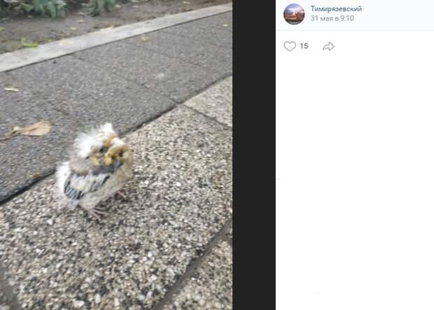 В парке «Дубки» птенца-слетка вернули матери