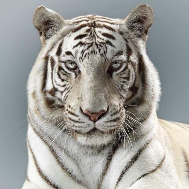 Портреты диких кошек показывают, насколько все они разные