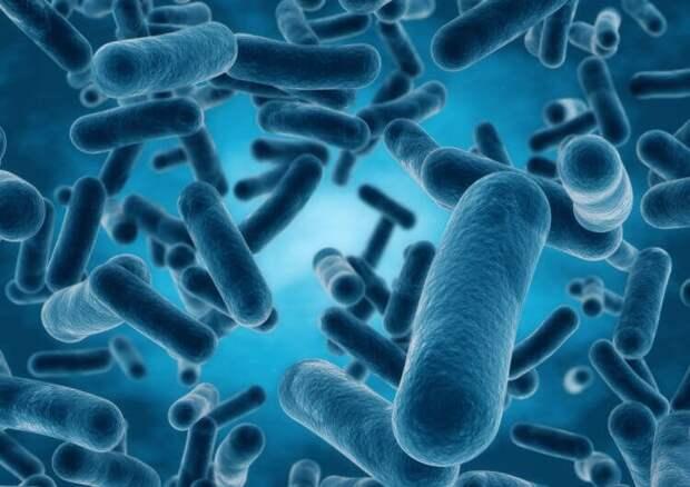 Ликбез: бактерии, микробы и вирусы: в чём разница?