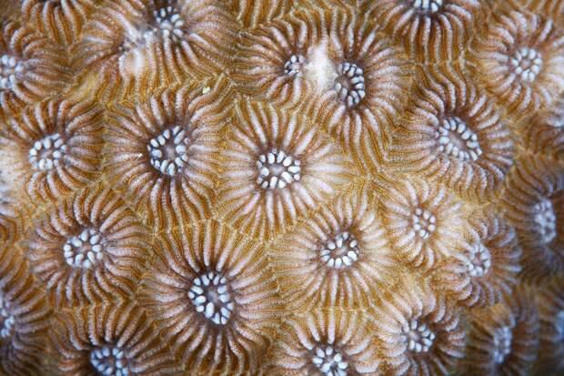 Corals14 Макрофотографии кораллов