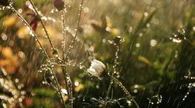 В понедельник в Крыму до 21 градуса тепла, дождь